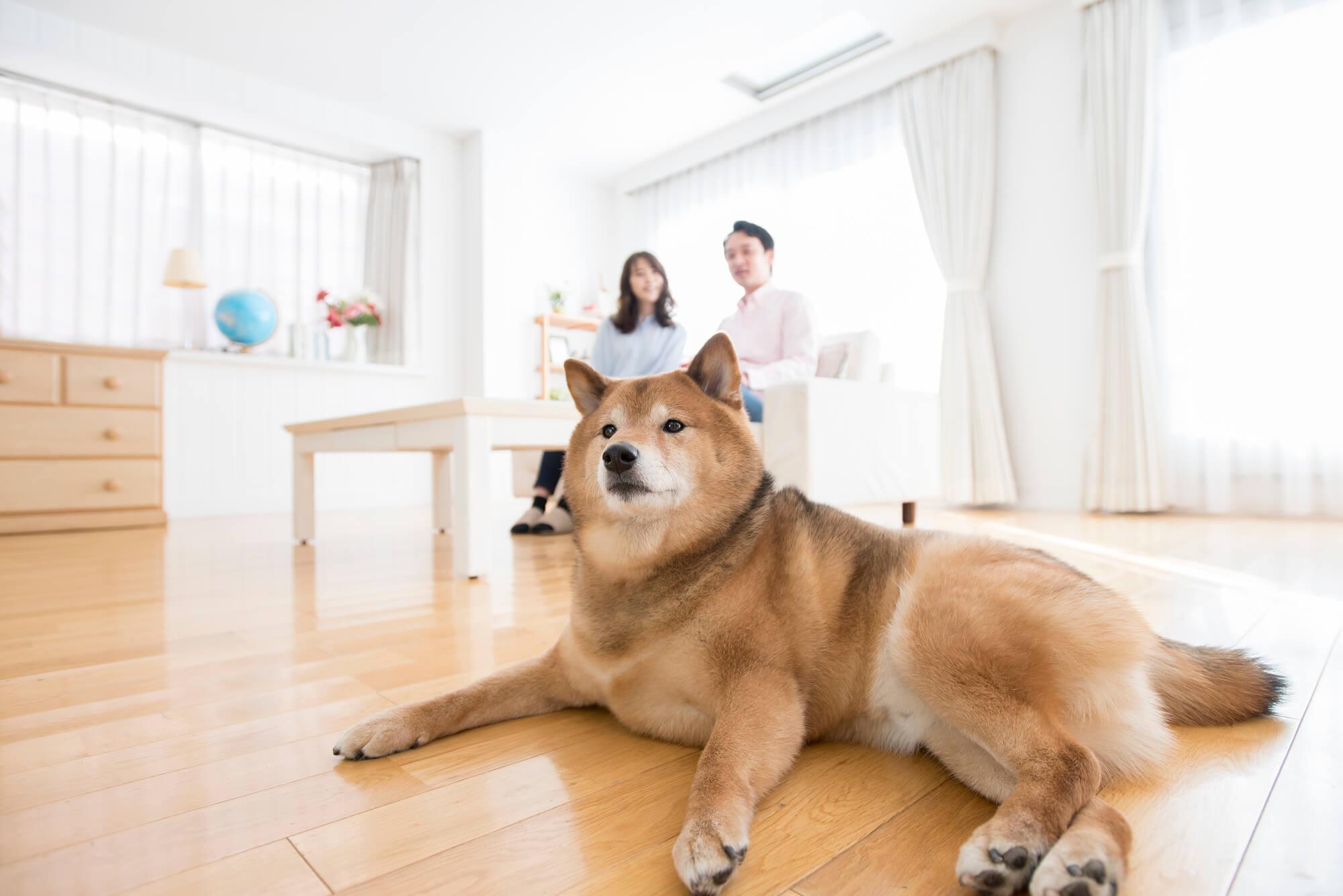 おしかホームが創る「愛犬家住宅」